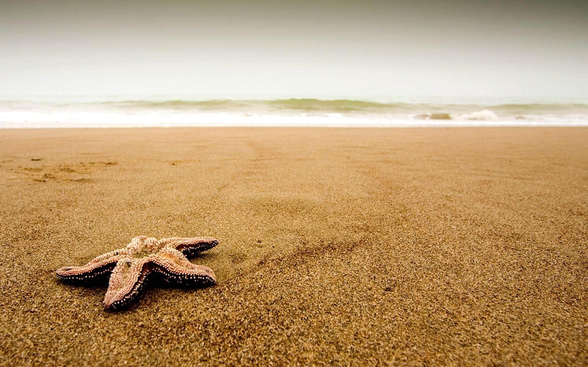 Beachsmaller